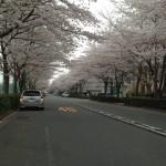 日記;桜・子供・疲れる