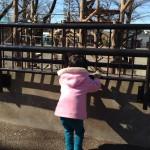 日記;動物園